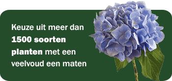 banner_voorpagina