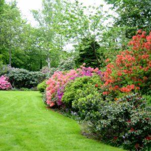 Coniferen & Rhododendron