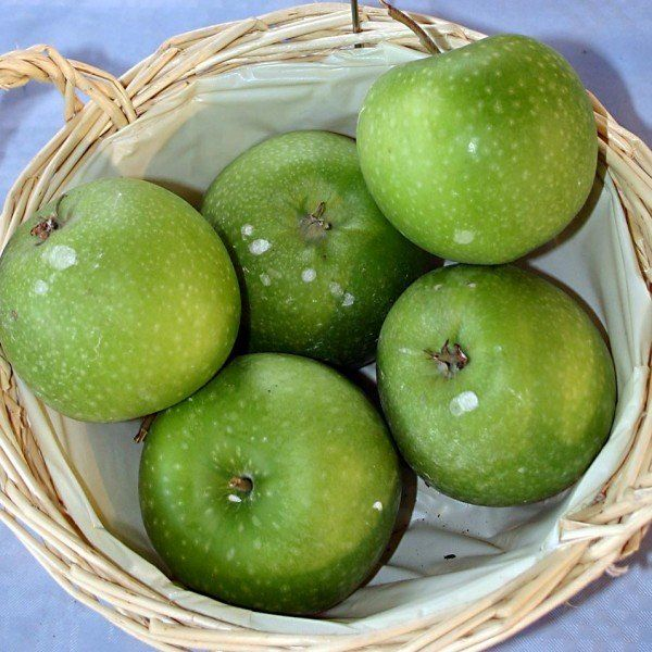 Malus 'Granny Smith'