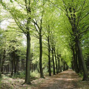 Bomen, niet leverbaar in zomermaanden