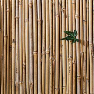 Bamboe